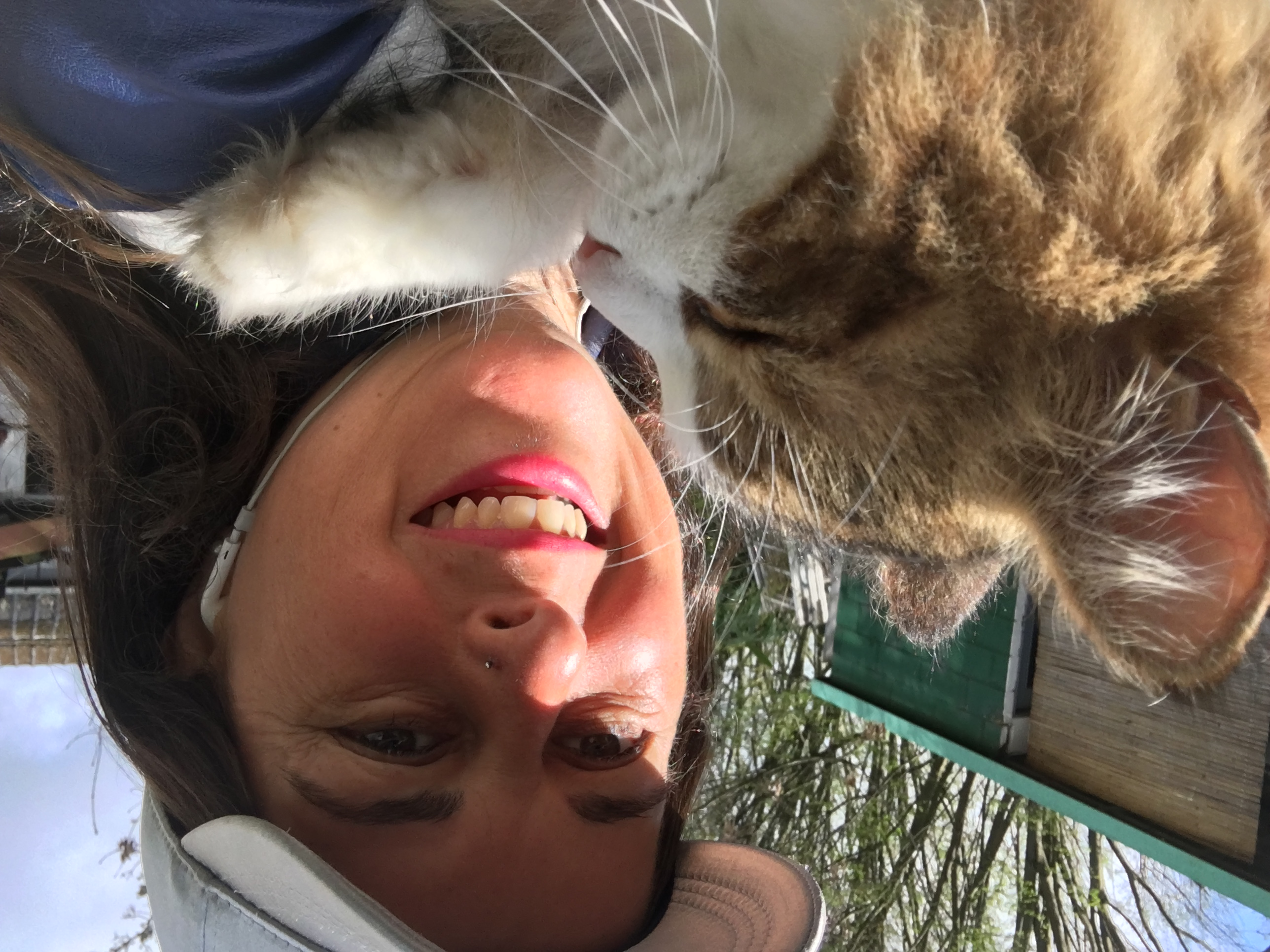 """animal healing """"until one has loved an animal, a part of one's soul remains unawakened"""" – anatole france professional animal healing and communication in south east england."""